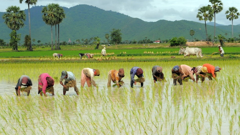 Signs of farm 'revolution' in India as coronavirus prompts change